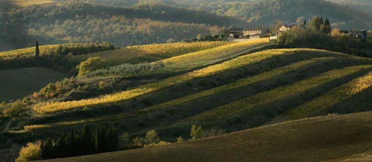 colline-toscane-cipressi